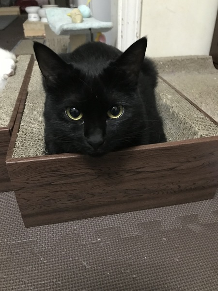 猫 黒猫 ユトの写真