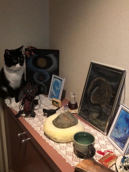 猫 雑種 はづきの写真