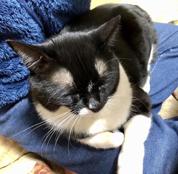 猫 黒ブチ さぬきの写真
