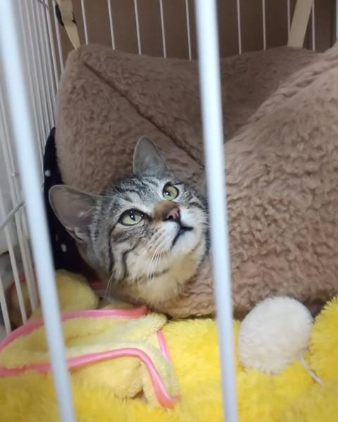 猫 キジトラ レオの写真