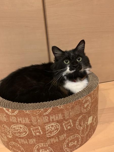 猫 ミックス もずくの写真
