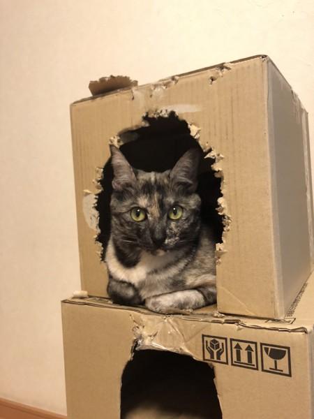 猫 サビ猫 うみちゃんの写真