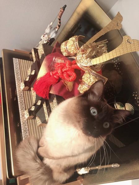 猫 洋猫MIX まうの写真