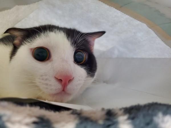 猫 雑種(ミックス) ほのぼのの写真