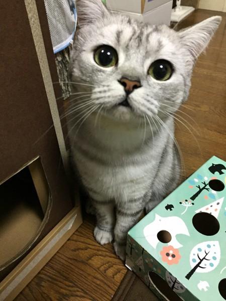 猫 ネコッヴィ ネコッヴィの写真