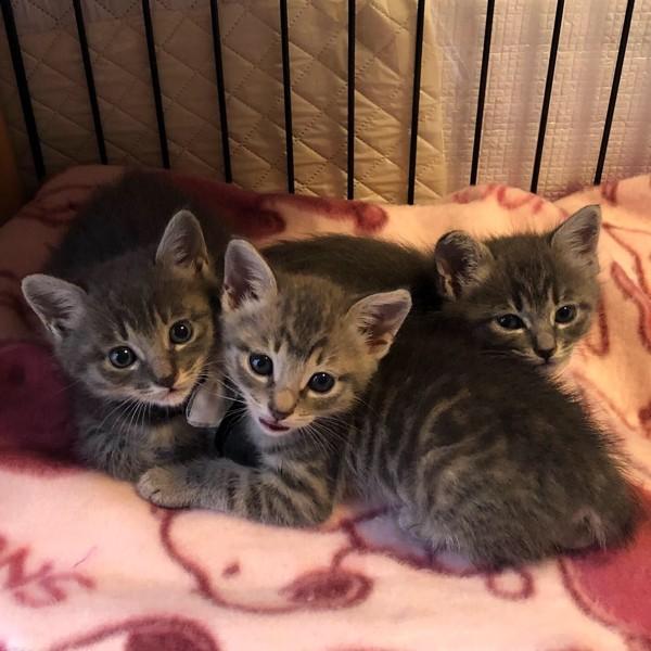 猫 雑種(ミックス) えむ、くろ、シナモンの写真