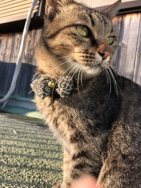 猫 雑種(ミックス) トロちゃんの写真