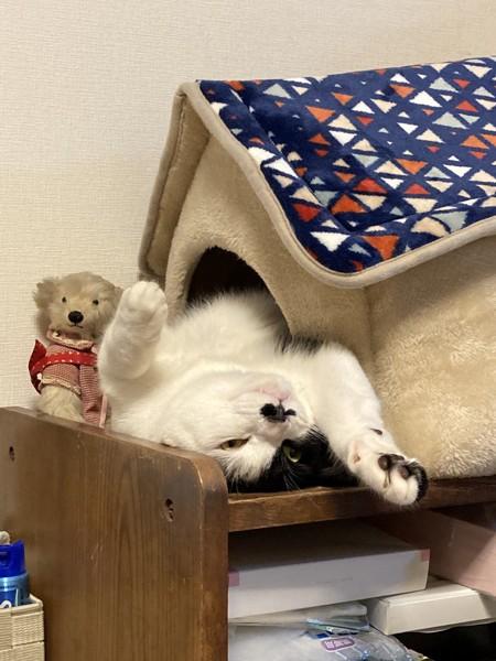 猫 雑種(ミックス) まんじ  二代目クロの写真