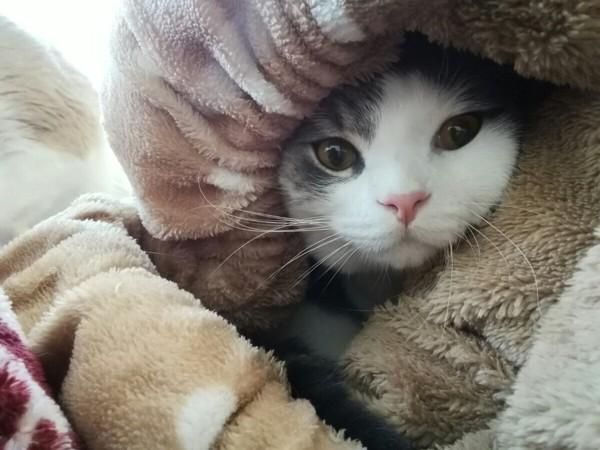 ママ愛用のとんねるクッションでぬくぬくな猫