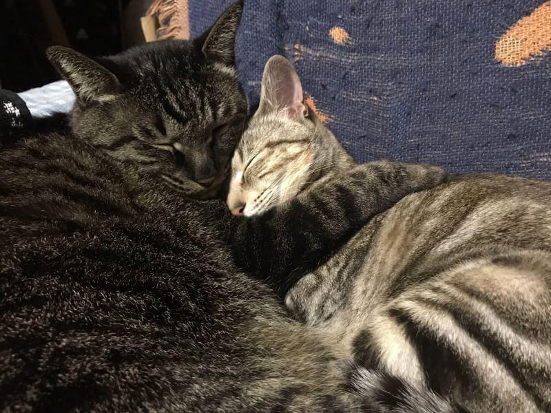 猫 雑種(ミックス) ラク&リリの写真
