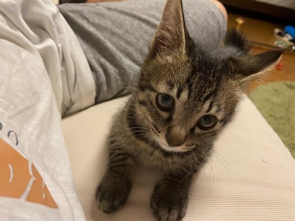 猫 雑種(ミックス) ぽんずの写真