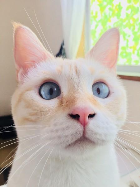 猫 MIX ららまるの写真