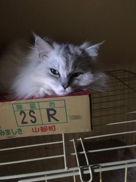 猫 ミックス アベルの写真