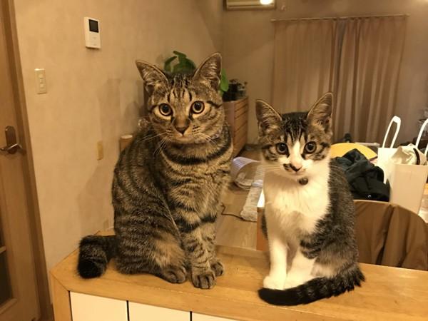 猫 雑種(ミックス) toto&mueの写真