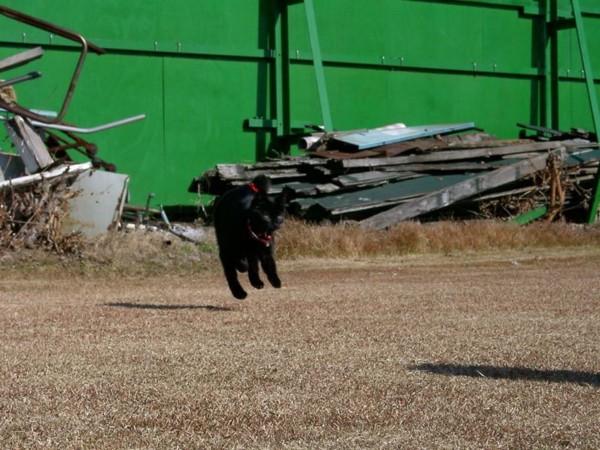 猫 黒猫 ミンクの写真