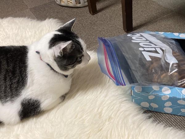 猫 ミックス しょうきちの写真