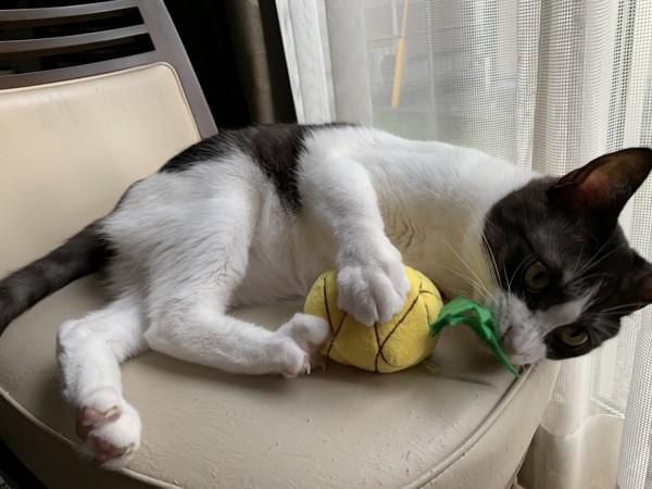 猫 雑種(ミックス) るーの写真