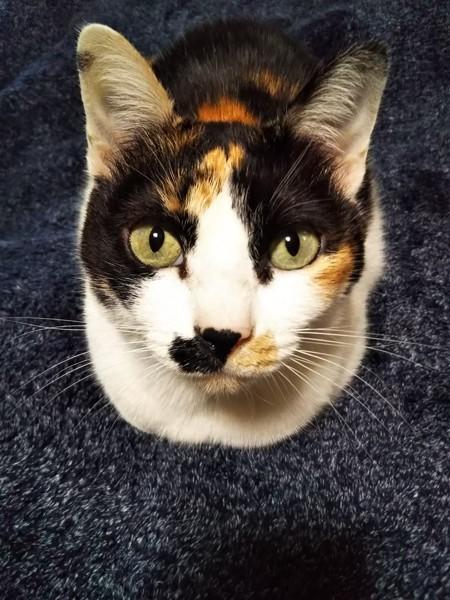 猫 三毛猫 なあの写真