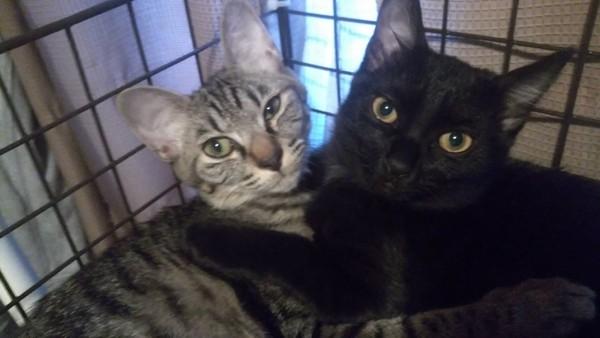 猫 雑種 テト&ミーコの写真