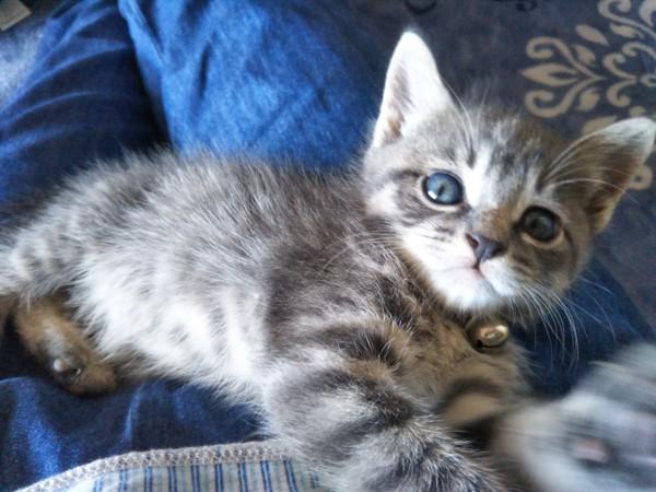 猫 雑種(ミックス) プー助の写真
