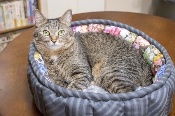 猫 雑種(ミックス) ゆずの写真
