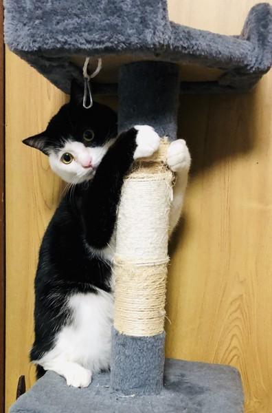 猫 ミックス まめの写真
