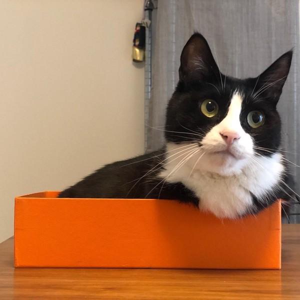 猫 雑種(ミックス) ぴあのの写真