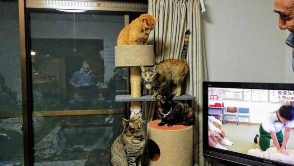 猫 雑種(ミックス) トラ&子猫達の写真