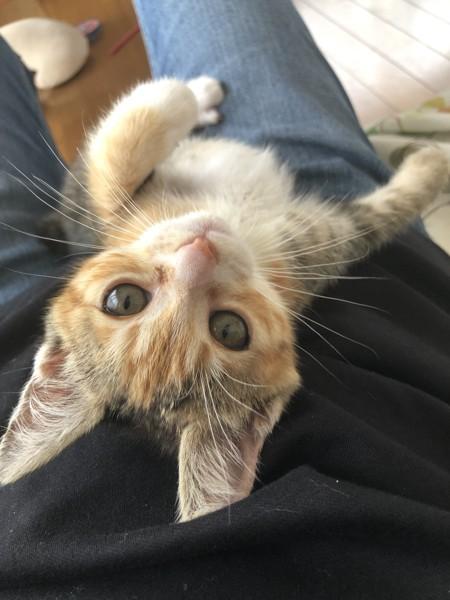 猫 三毛猫 千代ちゃんの写真