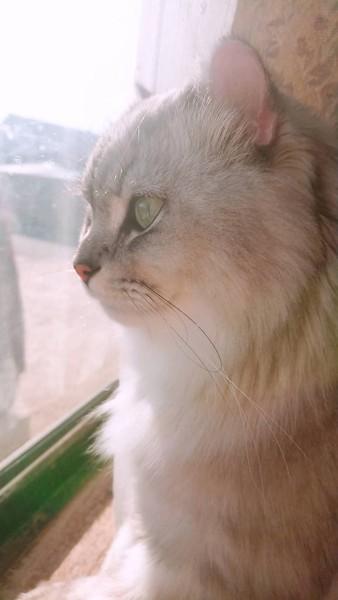 猫 雑種(ミックス) もなの写真