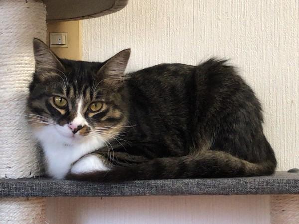 猫 キジトラ まめたの写真