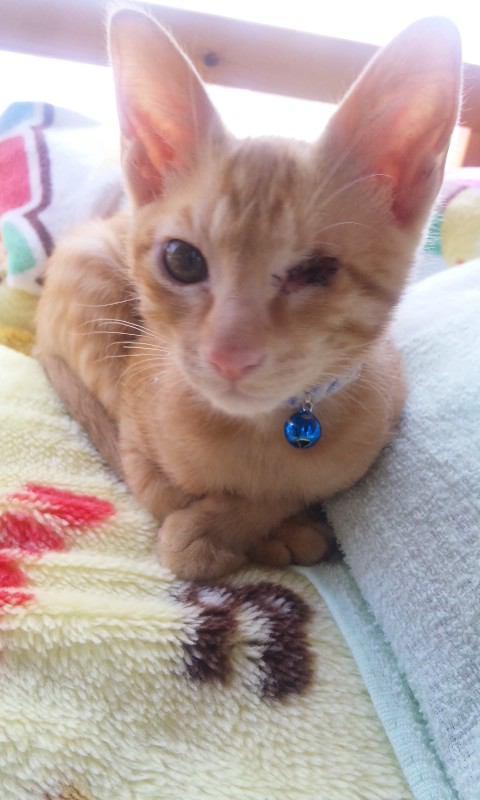 猫 茶トラ マイケルの写真