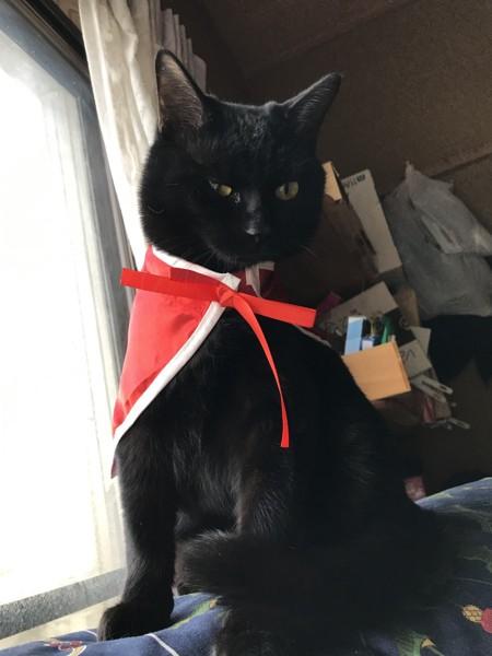 猫 黒猫 むぎの写真