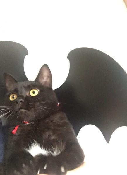 コウモリの翼をつけた黒猫