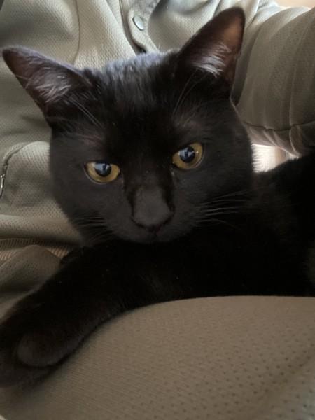 猫 黒猫 銀二の写真