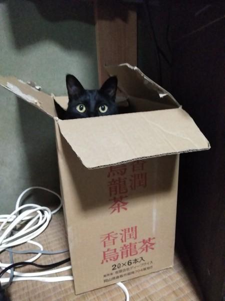 猫 黒猫 ナッツの写真