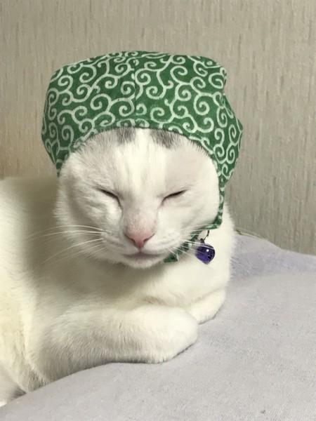 猫 白猫 麻呂の写真