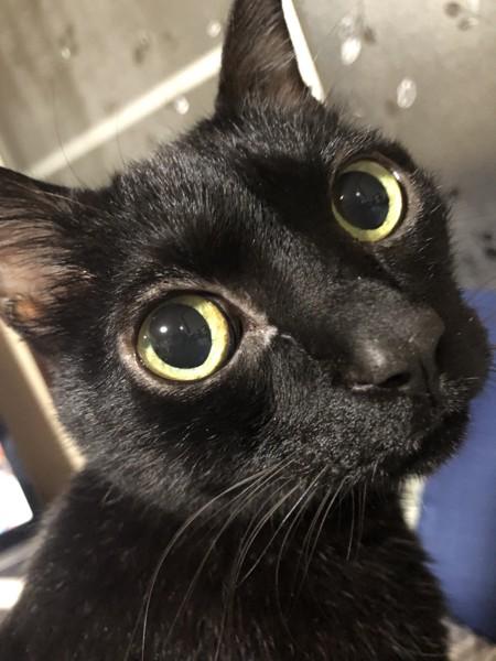 猫 黒猫 ルイの写真