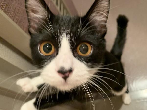 猫 雑種(ミックス) はちの写真