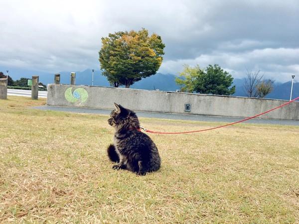 猫 雑種(ミックス) タイルの写真