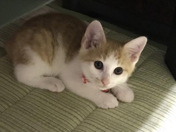 猫 雑種  MIX 小鉄ちゃんの写真