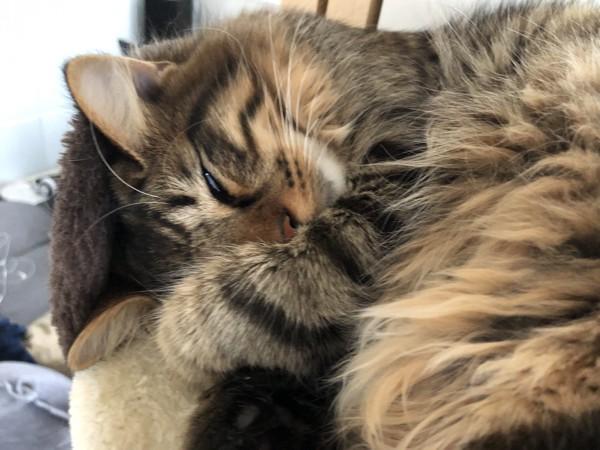 猫 雑種(ミックス) みーちゃんの写真