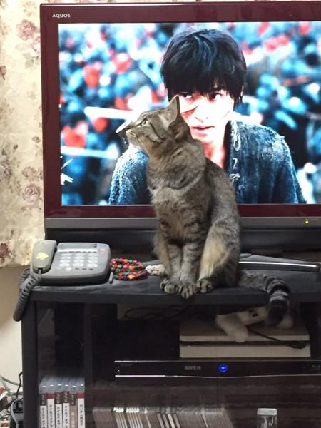 猫 アメリカンカール ミーコどんの写真