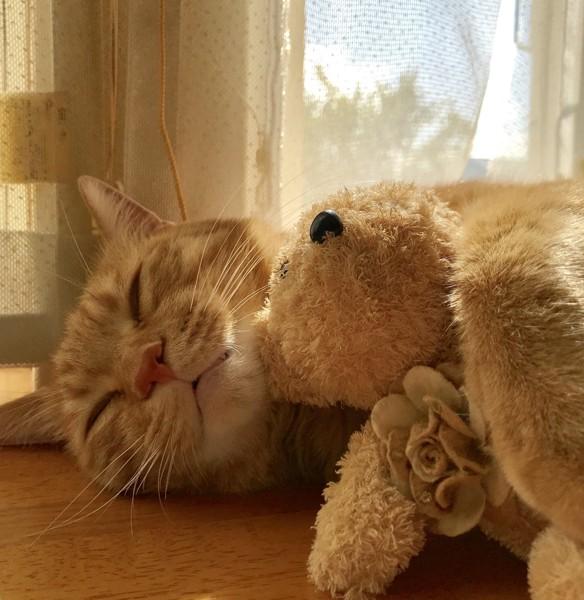 猫 ミックス 福の写真