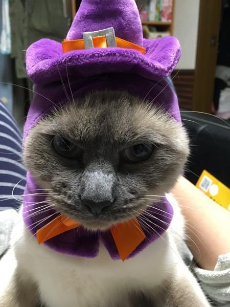 魔法使いの帽子をかぶってこちらをにらむ猫