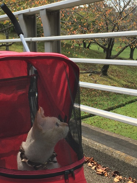 秋の日のお散歩