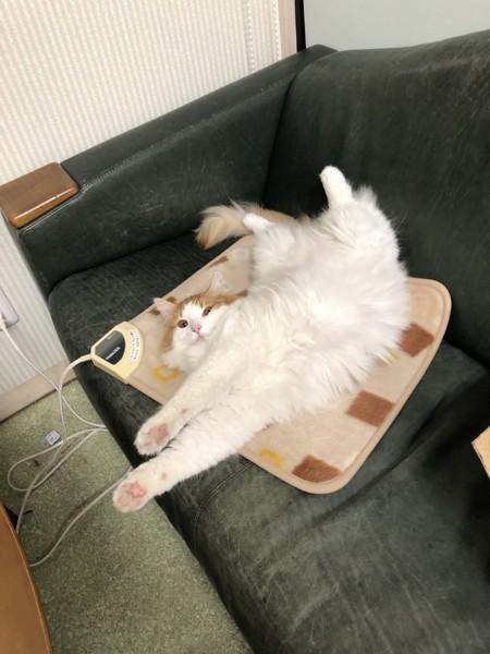 ホットカーペットでくつろぐ猫