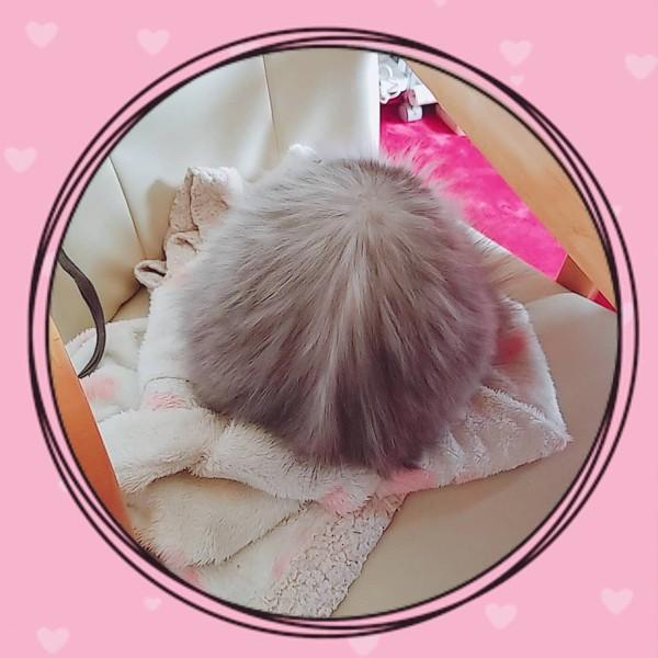 猫 チンチラペルシャ ルータんの写真