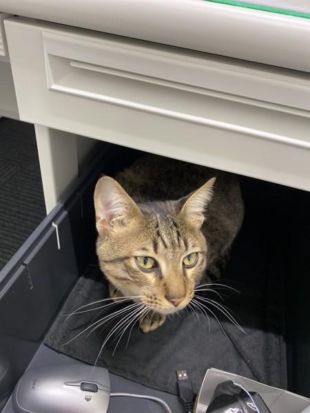 猫 キジトラ リキの写真