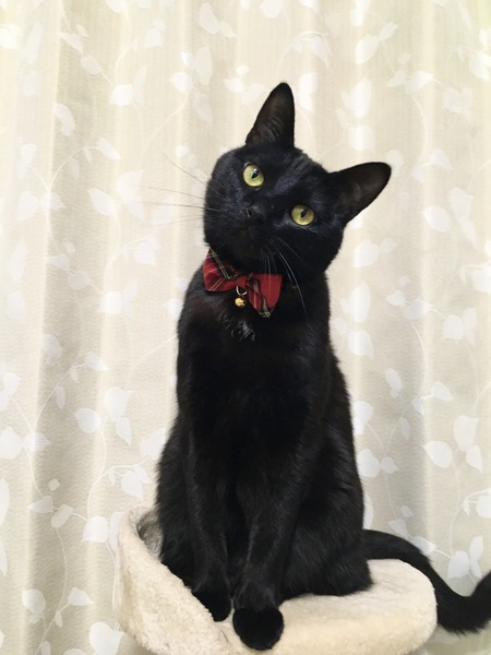 猫 黒猫 レンの写真